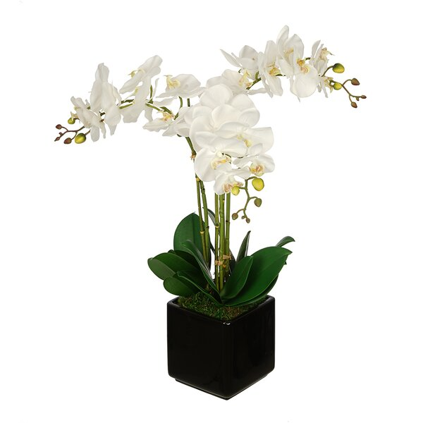 Artificial Triple Stem Orchid in Cube Vase by House of Silk Flowers Inc.
