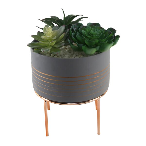 Succulent Plant in Pot Set by Mercer41