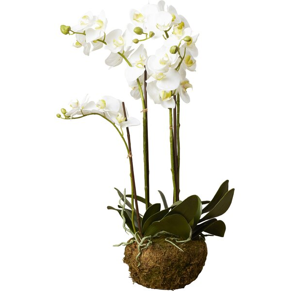 Phalaenopsis Faux Floral Orchids Flowers by House of Hampton