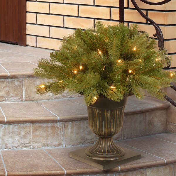 Floor Cedar Tree in Urn by The Holiday Aisle