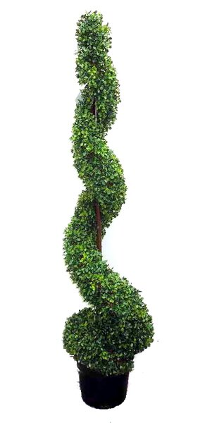 Spiral Floor Boxwood Topiary in Pot (Set of 2) by Admired by Nature