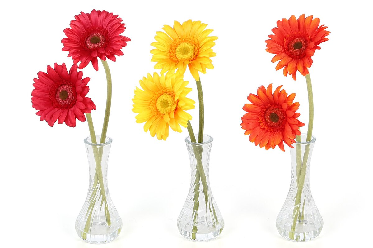 August grove daisy in red orange yellow with bud vase daisy in red orange yellow with bud vase reviewsmspy