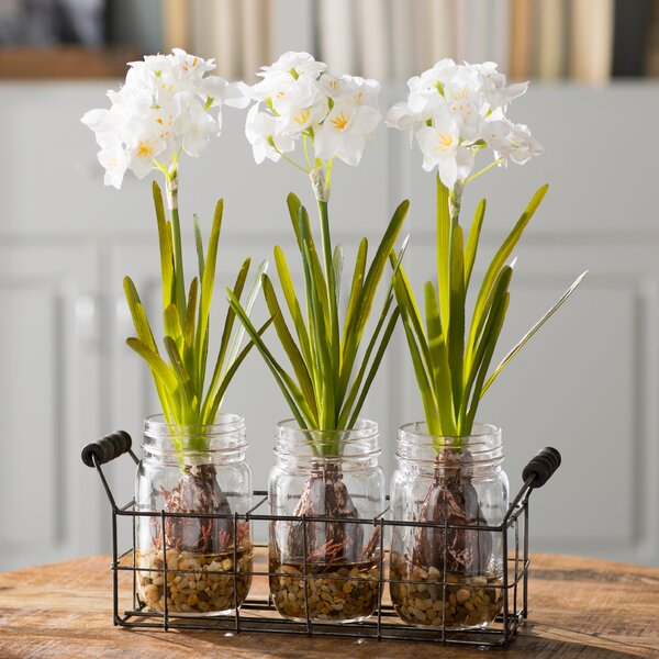 Orchids Flower in Glass Jars by Laurel Foundry Modern Farmhouse