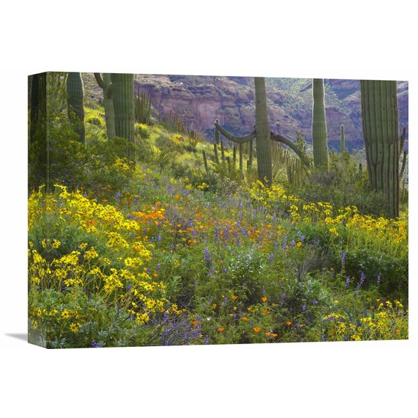 Nature Photographs Saguaro Amid Flowering Lupine, Organ Pipe Cactus National Monument, Arizona by Tim Fitzharris Photographic Print on Wrapped Canvas by Global Gallery