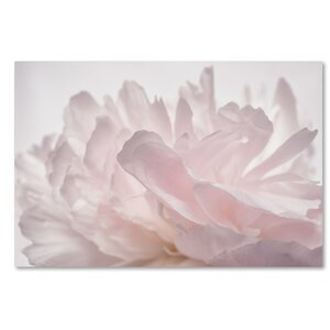 Pink Peony Petals V by Cora Niele Photographic Print on Wrapped Canvas by Trademark Fine Art