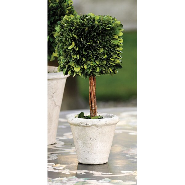 9.5-inch Tall Preserved Desktop Boxwood Topiary in Pot (Set of 2) by Zodax