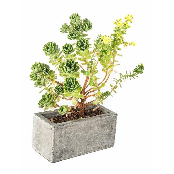Madera Composite Planter Box by My Spirit Garden