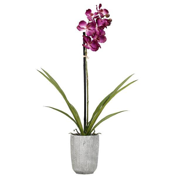 Vanda Orchids Floral Arrangement in Planter by House of Hampton