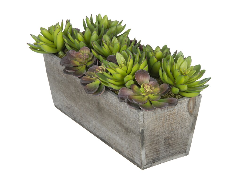 House of Silk Flowers Artificial Succulent Garden Desk Top Plant in ...