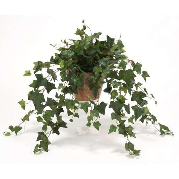 Silk MountaIn Ivy Desk Top Plant in Stained Clay Pot (Set of 2) by Distinctive Designs