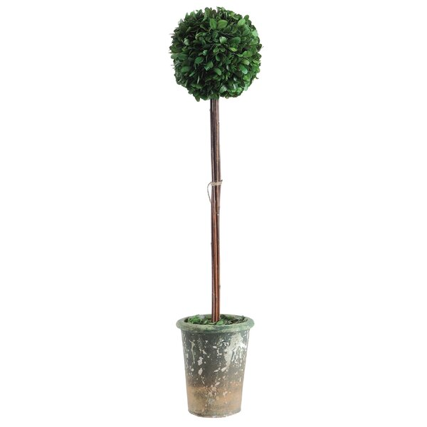 Boxwood Single Ball Round Topiary in Pot by Ophelia & Co.