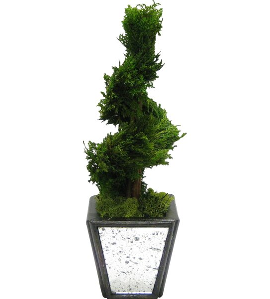 Wooden Container Spiral Topiary in Pot by Bougainvillea