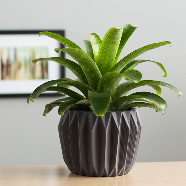 Amare Fluted Ceramic Pot Planter by Langley Street