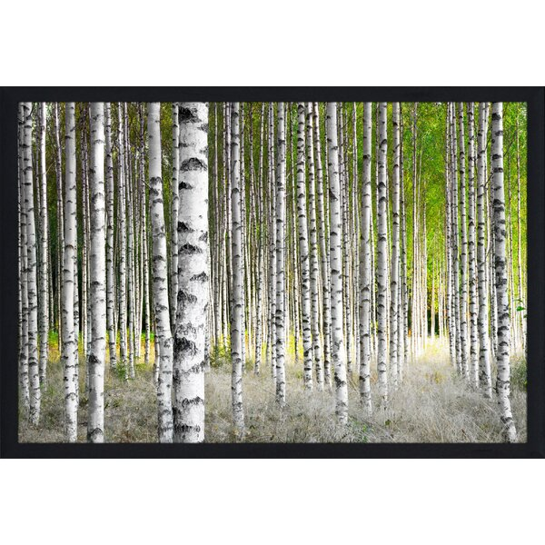 Birch Trees 1 Framed Photographic Print by Picture Perfect International
