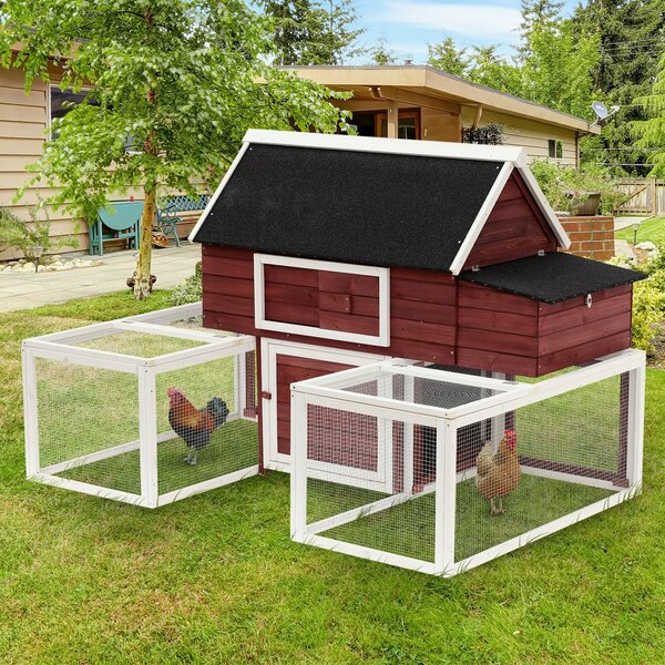 Garnett Modular Wooden Backyard Chicken Coop with Nesting Box and Dual Outdoor Runs by Tucker Murphy Pet