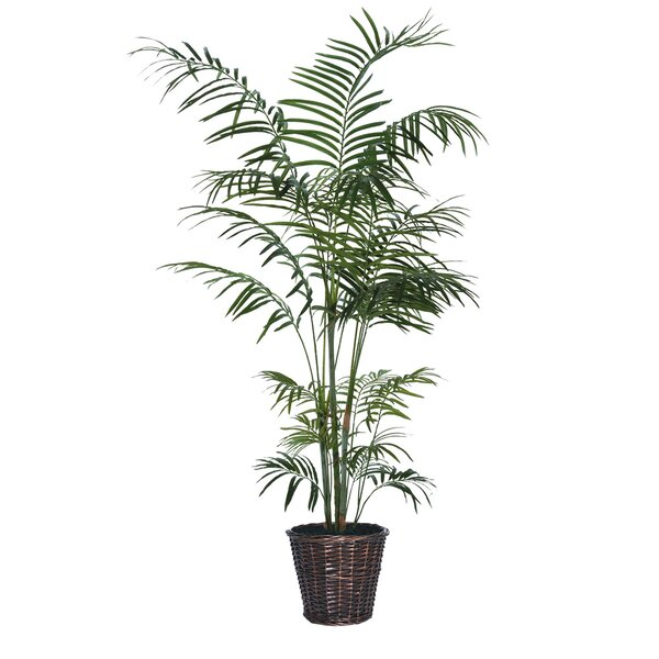 Deluxe Tropical Palm Tree in Basket by Bay Isle Home
