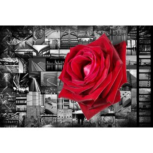 Donovan Kade 'Rose In City' Graphic Art on Canvas by iCanvas