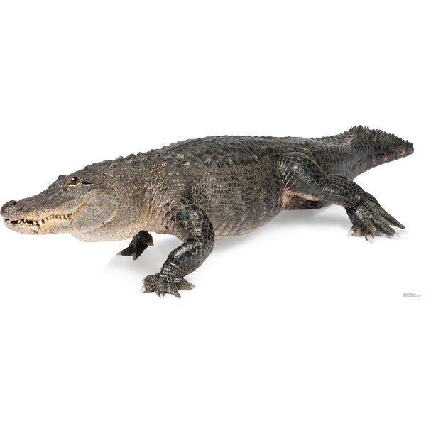 American Alligator Cardboard Stand-Up by Advanced Graphics