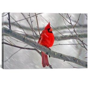 'Cardinal Bird' Graphic Art Print by East Urban Home