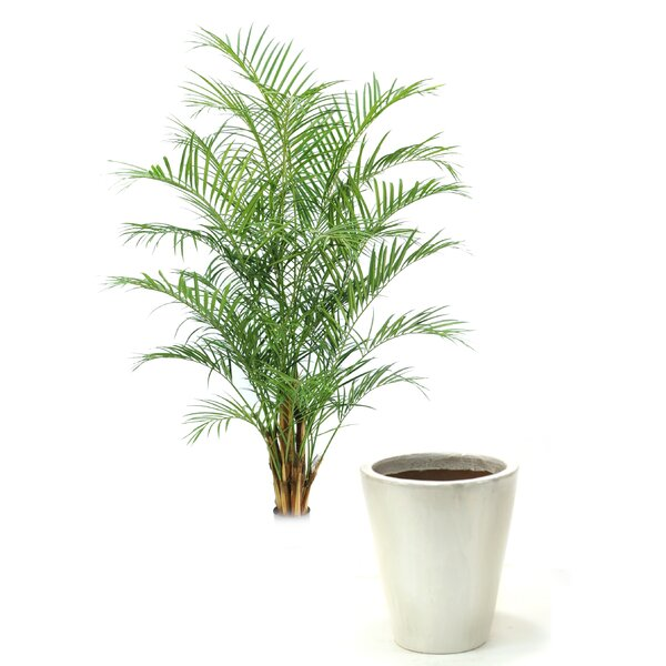 Areca Floor Palm Tree in Planter by Distinctive Designs