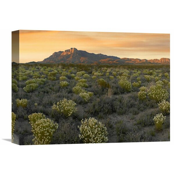 Nature Photographs Pepperweed Meadow Beneath El Capitan, Guadalupe Mountains National Park, Texas Photographic Print on Wrapped Canvas by Global Gallery