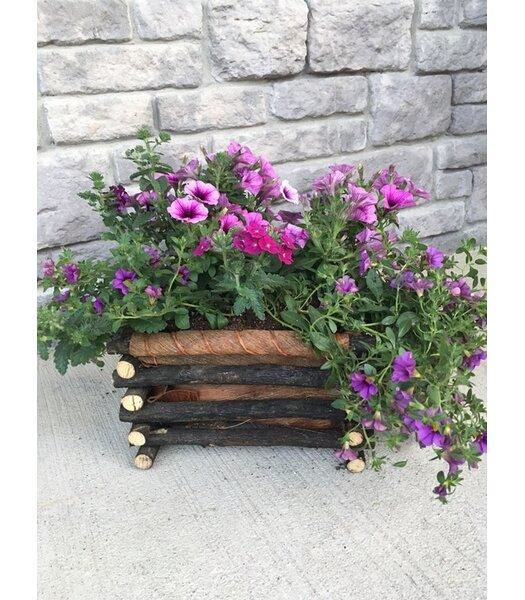 Lola Twig/Tistis Pot Planter by Loon Peak