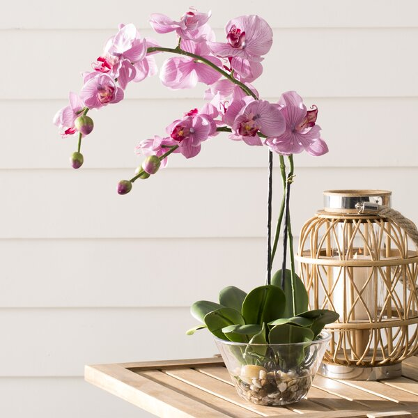 Orchid with Glass Vase by World Menagerie