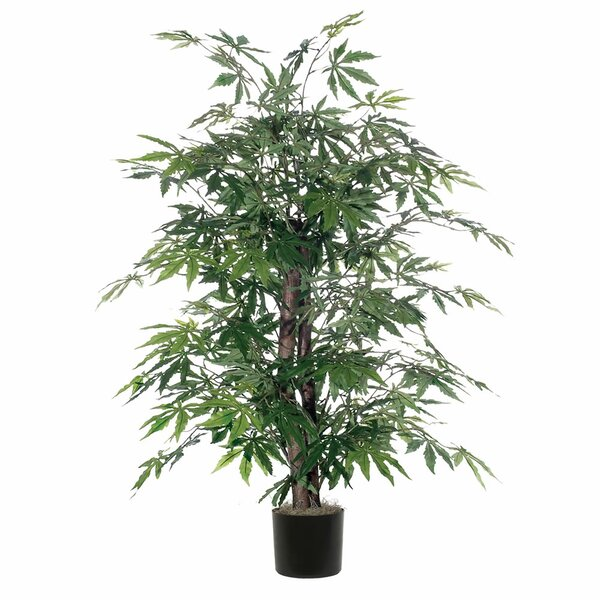 Maple Bush Tree in Round Pot by World Menagerie