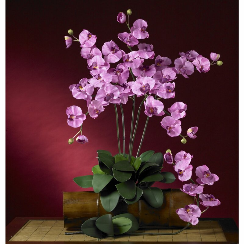 floral home decor orchid floral design wayfair.htm nearly natural phalaenopsis orchids floral arrangement wayfair  phalaenopsis orchids floral arrangement