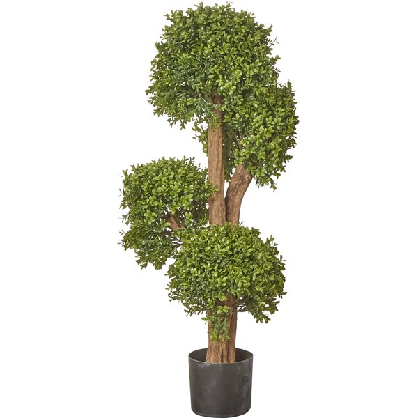 Boxwood Tree in Pot by Brayden Studio