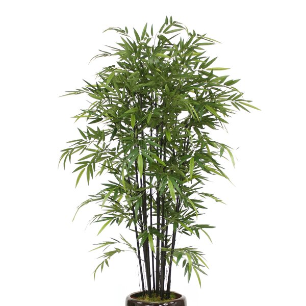 Bamboo Tree in Planter by Distinctive Designs
