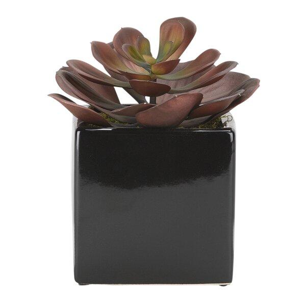 Echeveria Square Ceramic Floor Foliage Plant in Black Planter by Orren Ellis