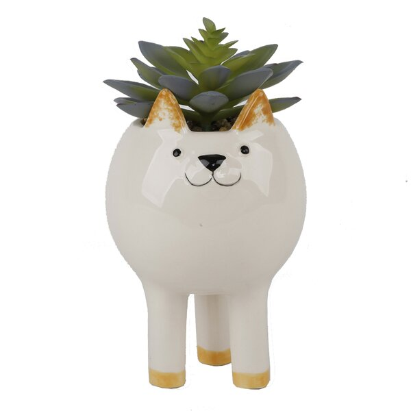 Tall Cat Desktop Succulent Plant in Pot by Ebern D