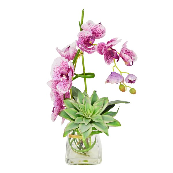 Spotted Phalaenopsis and Echeveria in Water Vase by Ivy Bronx