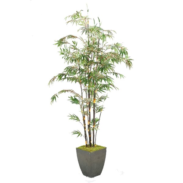Bamboo Tree Floor Plant in Planter by Bloomsbury Market