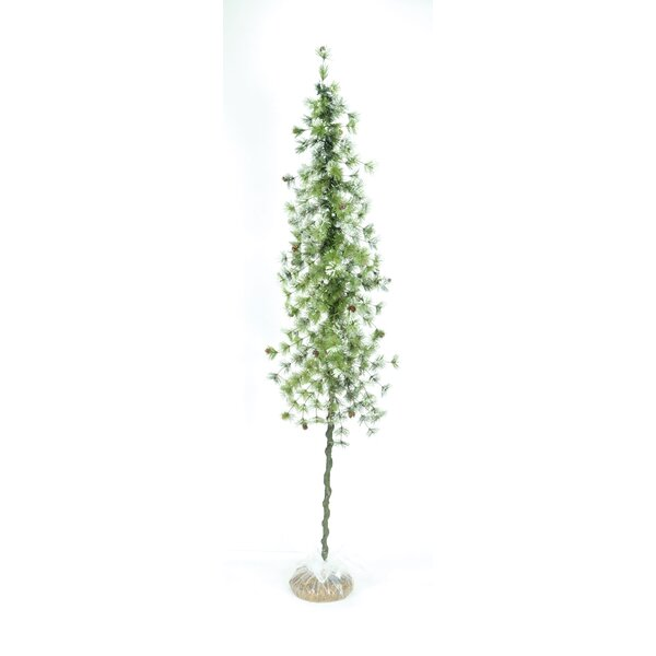 Snow Ming Pine Crooked Floor Boxwood Tree by The Holiday Aisle