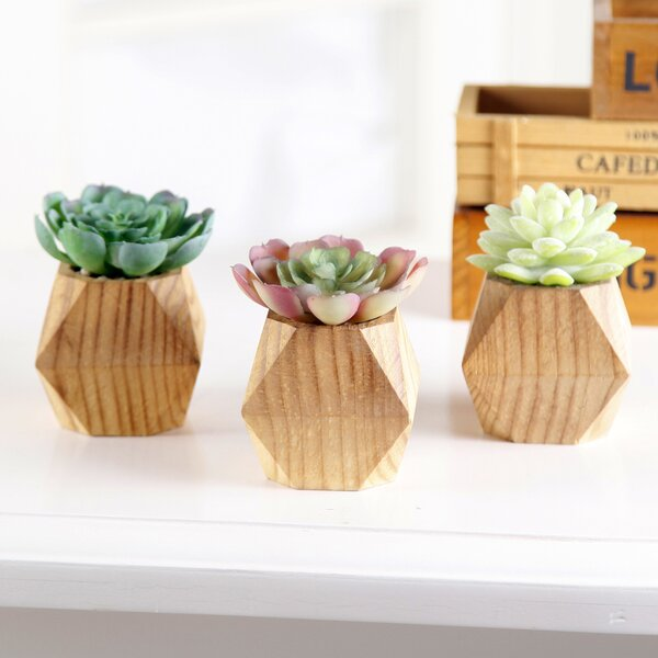 3 Piece Succulent Plant in Pot Set by Bungalow Rose