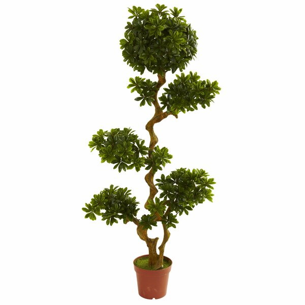 Pittispourm Topiary in Pot by Darby Home Co