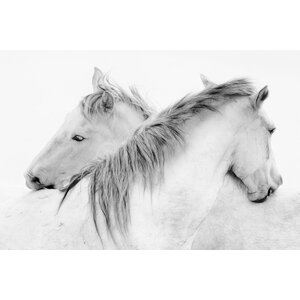 'Stas - Horses' Photographic Print on Canvas by Union Rustic