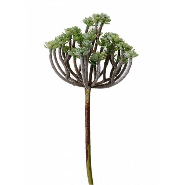 Desktop Succulent Mini Tree by Bungalow Rose