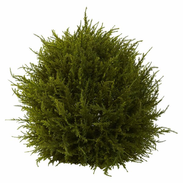 Cedar Decorative Sphere Topiary by Alcott Hill