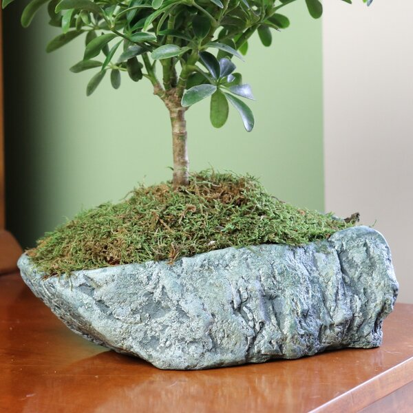 Pardue Natural Elements Rock Concrete Pot Planter by Bloomsbury Market