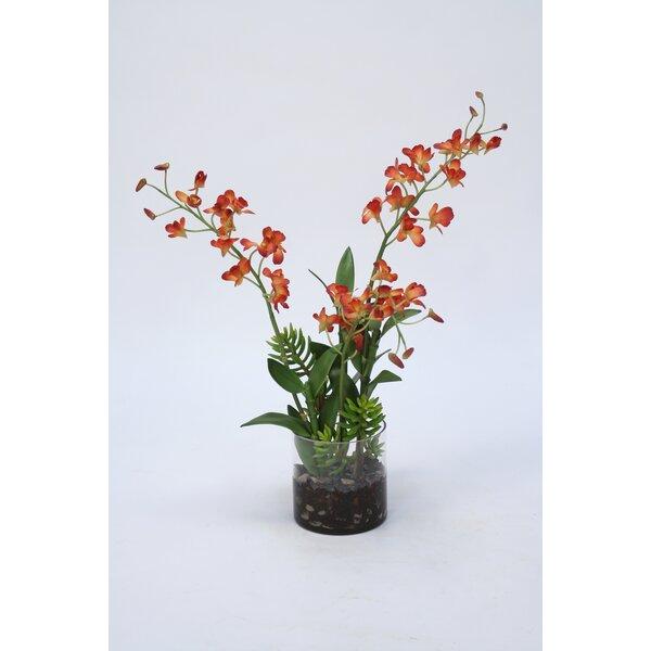 Dendrobium Orchids Floral Arrangement in Vase by Bayou Breeze