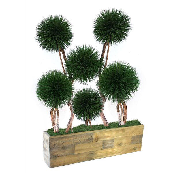 Exclusive Dracena in Wooden Planter by Latitude Run