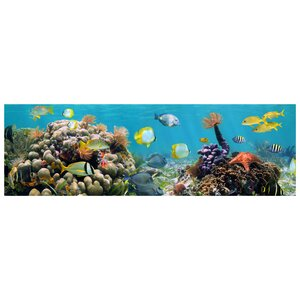 Coral Reef Photographic Print by Prestige Art Studios