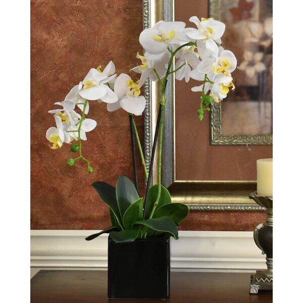 Phalaenopsis Orchids Flower Floral Arrangement in Decorative Vase by Darby Home Co