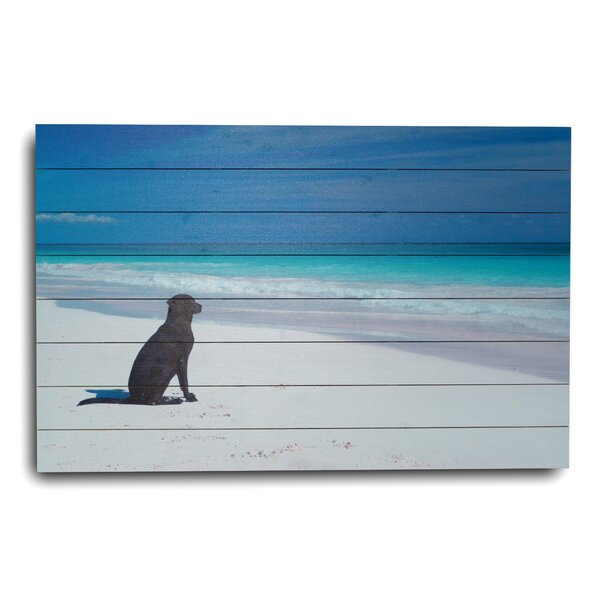 Dog at the Beach Photographic Print by Gallery 57