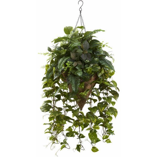 Vining Mixed Greens Hanging Plant in Basket by Nearly Natural