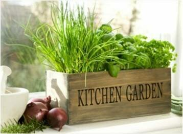Crebilly Wood Kitchen Garden Window Box Planter by Gracie Oaks