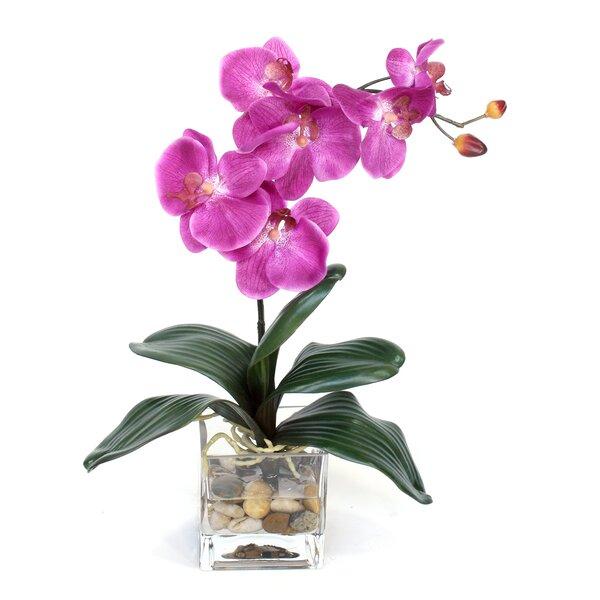 Fuchsia Orchid in Glass Vase by Dalmarko Designs